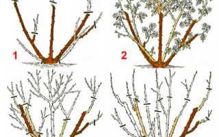 Как правильно обрезать розу на зиму, правила, инструменты, технология