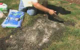 Некоторые особенности по посеву и уходу за травой, которая вытесняет сорняки с газона