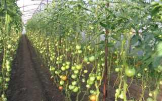 Что можно выращивать в теплице — все самое интересное