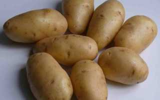 Как вырастить крупный картофель — посадка и уход