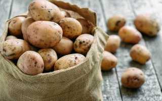 5 главных правил успешной зимовки картофеля