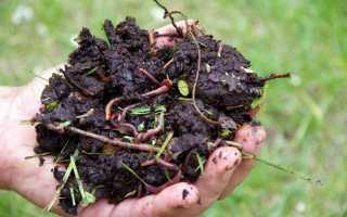 Дождевые черви — зачем нужны и как их развести для производства удобрения?