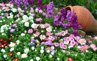 Модные цветы в горшках — каковы они и как выбрать для них горшок