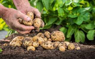 Техника для выращивания картофеля — практические рекомендации