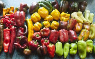 Перец Владыка — описание сорта, особенности выращивания
