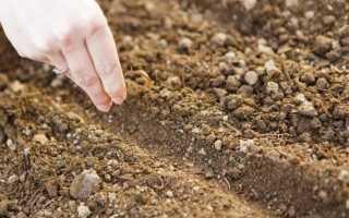 Для прорастания семян необходимы определенные факторы — какие?