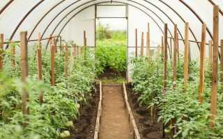 Почва в теплице: менять или улучшать? Советы по восстановлению плодородия