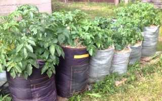 Посадка картофеля в мешках — суть и преимущества метода