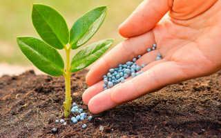 Янтарная кислота как удобрение для комнатных цветов — приготовление раствора