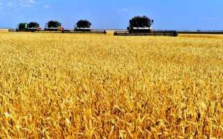 Культурные зерновые растения — основные характеристики