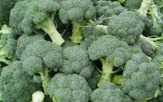 Красивые и ценные сорта капусты брокколи для полноценного питания и лечения
