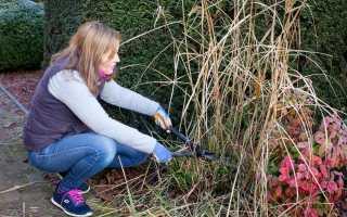 Особенности весенней обрезки декоративных трав