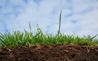 Кислотность почвы — это плохо или хорошо, способы проверки