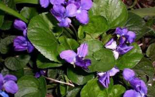 Многолетние цветущие растения для дачи — когда и как сажать цветы