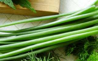 Как вырастить зеленый лук в домашних условиях — все ответы от посадки до сбора урожая
