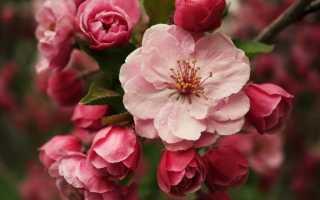 Подкормка цветов йодом — для комнатных цветов, овощей и ягод