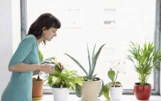 Применение перекиси водорода для комнатных растений — способы и эффективность