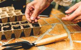 Лунный календарь садовода и огородника на январь 2020