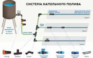 Система капельного орошения: схема, монтаж ленты для полива своими руками