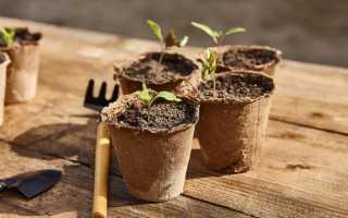 Защищаем рассаду от чёрной ножки и корневой гнили