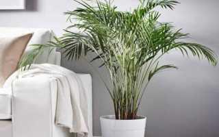 Земля для пальм — состав, дополнительные элементы