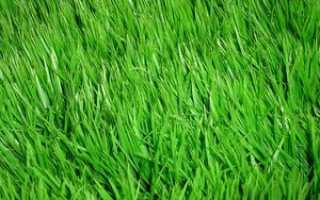 Трава для газона, ее необходимые качества, разбираемся, как сажать траву весной и подготавливать почту