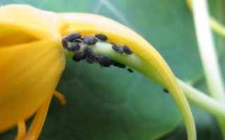 Инсектициды — что это такое и как их применять