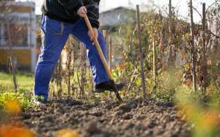 Зачем перекапывать почву осенью, и когда лучше не копать?