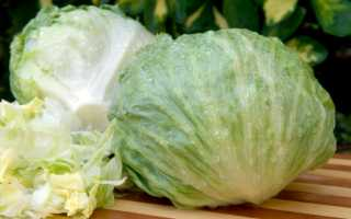 Салат Айсберг — отличительные черты выращивания в теплице, правила ухода