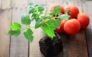 Томаты — правильные подкормки от рассады до урожая