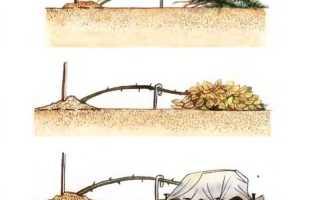 Как укрыть штамбовые розы на зиму, правила, способы укрытия и материалы
