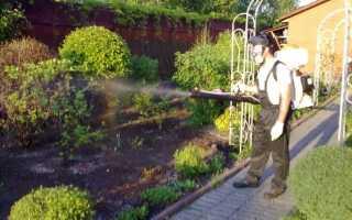 Когда и чем опрыскивать плодовые деревья — советы садоводам