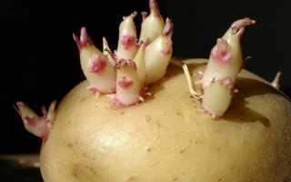 Размножение картофеля — вегетативное, семенное или черенкованием