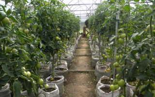 Выращивание в теплице круглый год — советы, нюансы и методы