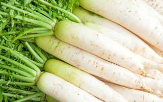 Редис белый — как выращивать, что выбрать и почему именно белый