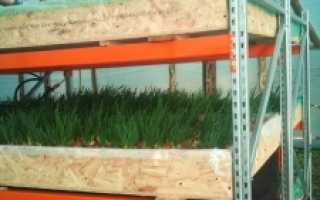 Гидропонная установка для выращивания зелени — нетрадиционное земледелие