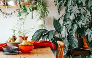 7 неприхотливых лиан, или Мои самые неубиваемые комнатные растения