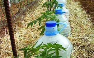 Способы изготовления систем капельного полива из пластиковых бутылок своими руками