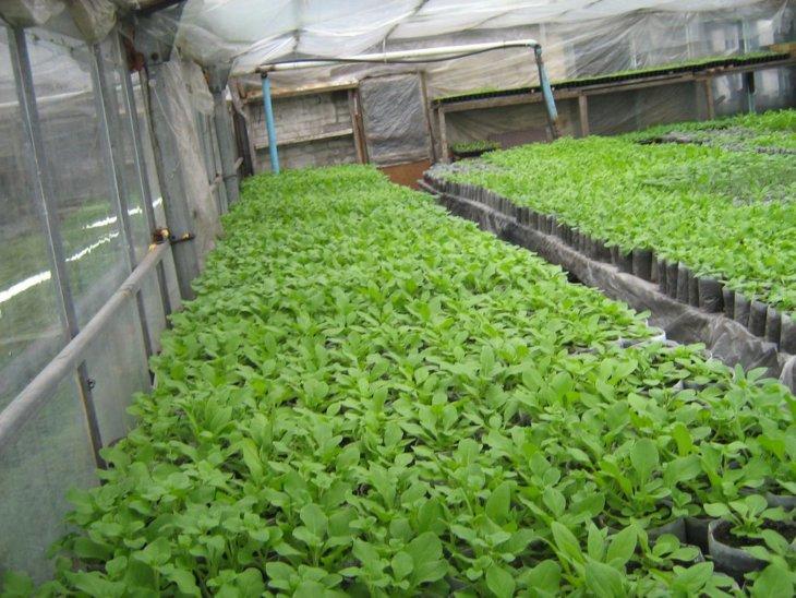 Выращивание зелени в зимний период