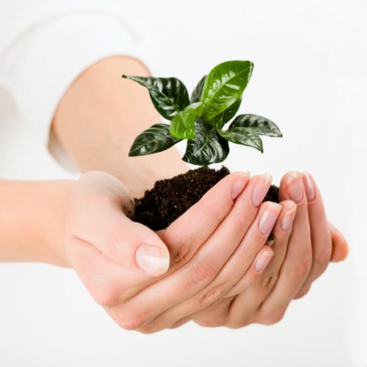 Обрабатывать растение лучше всего утром или поздно вечером