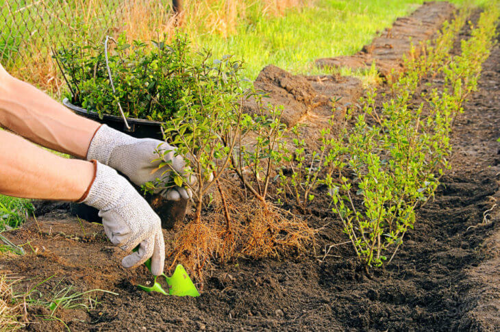 Здоровые растения - залог успеха садовода