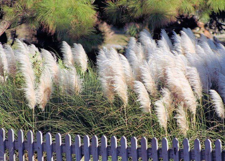 Украшение садовой изгороди