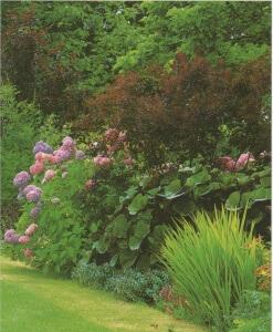 Перед планировкой обустройства необходимо пролить свет на тень, выяснить, с чем садовнику придётся иметь дело