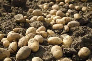 Для хранения продукта в яме необходимо определить возвышенное сухое место