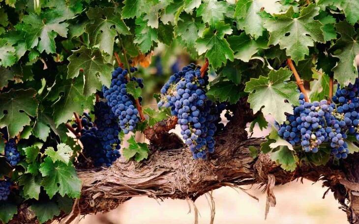 Удобрение нужно вносить в почву один раз в месяц