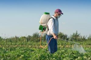 Обработка растений с помощью инсектицидов