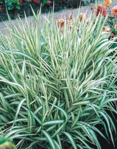 Прекрасное растение в саду