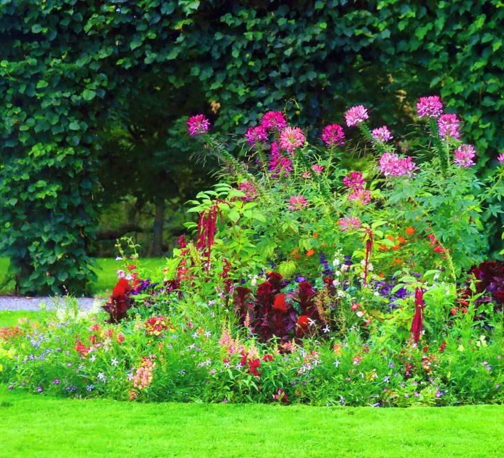 Высокие растения в центе клумбы