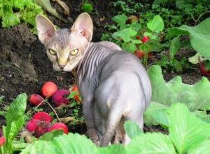 Кот отлично поможет в борьбе с мышами