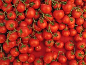 Для того чтобы семена проросли необходимо замочить их в специальном растворе